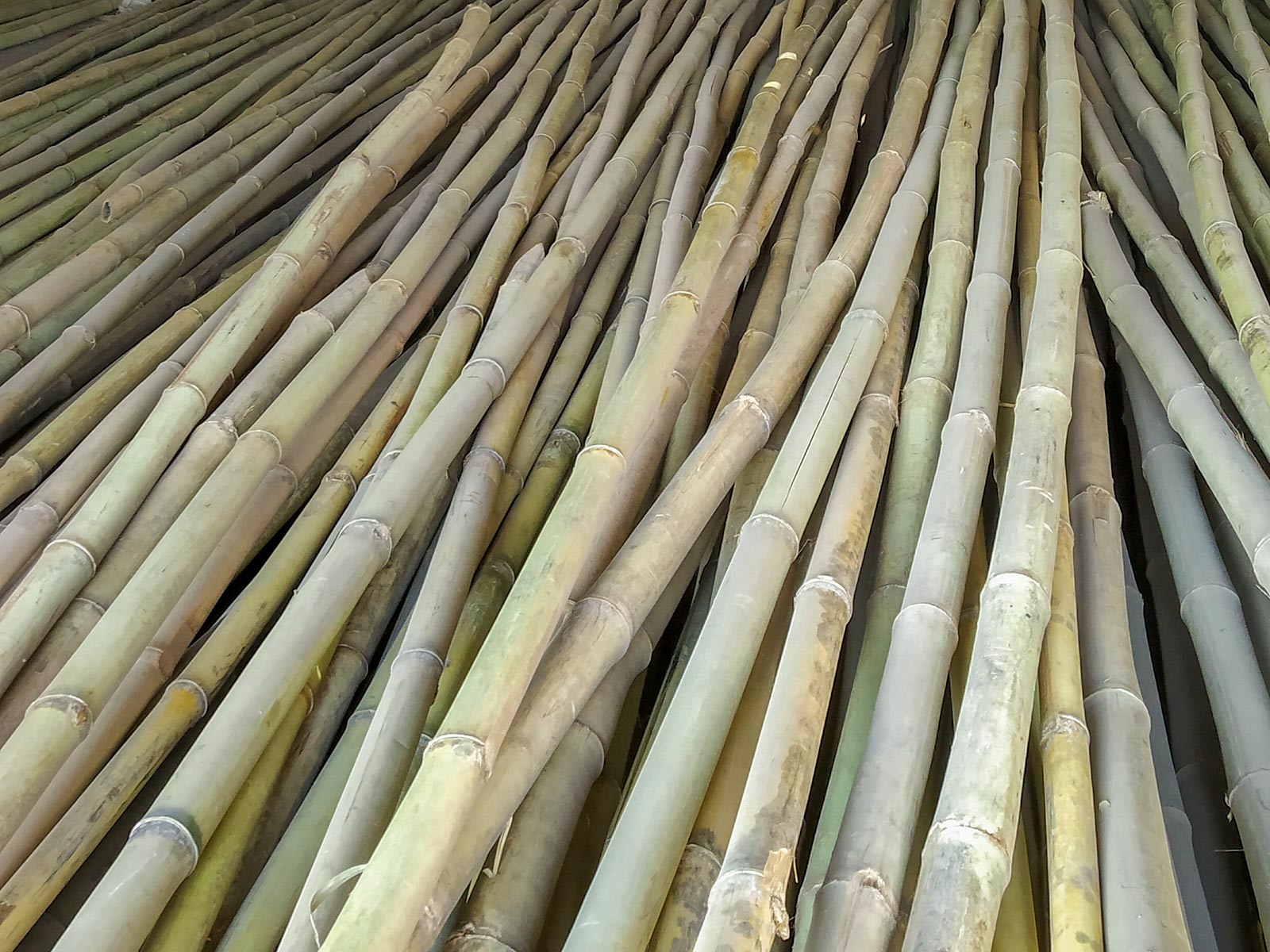 indian bamboo at market