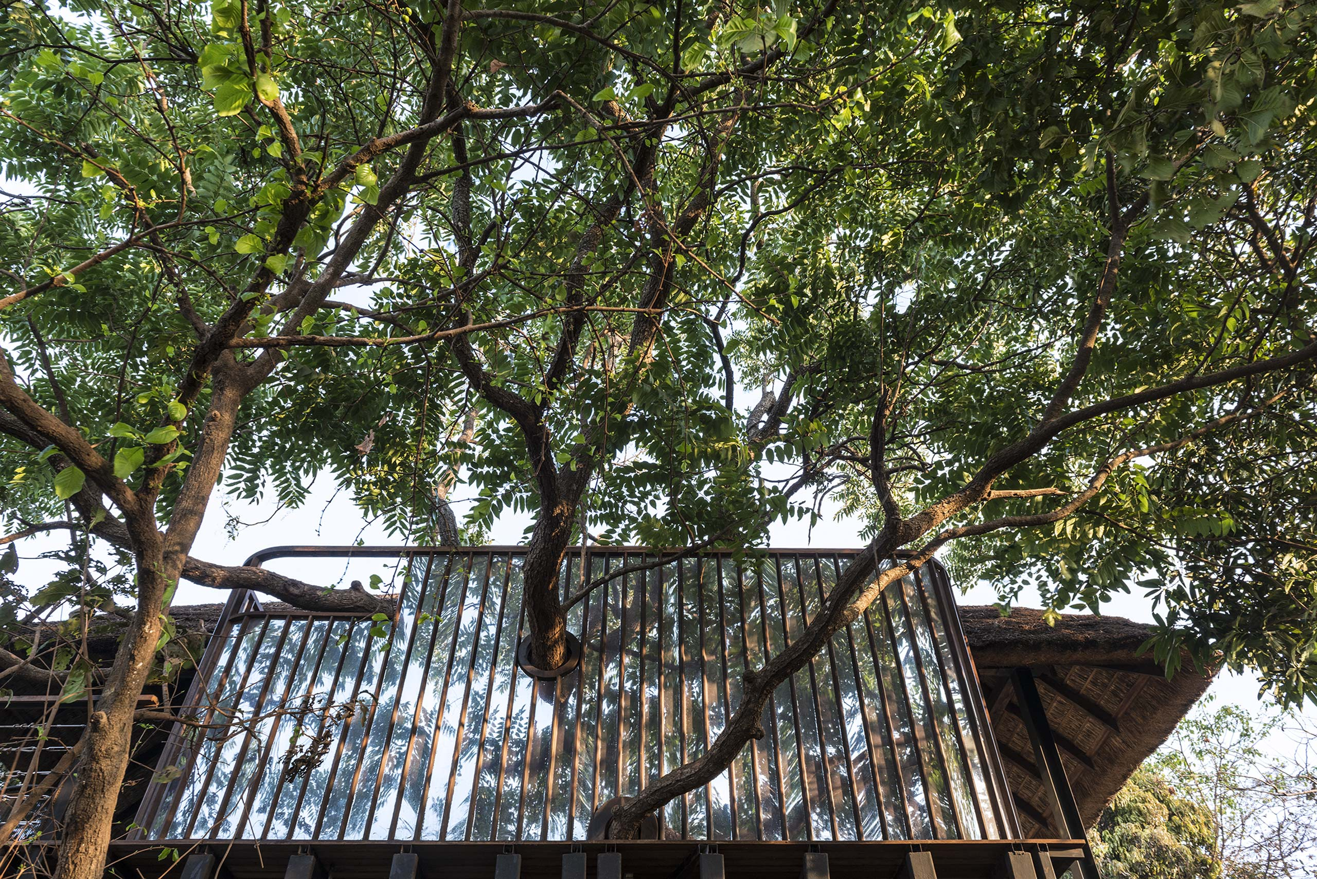 exterior view of trees piercing through tree house