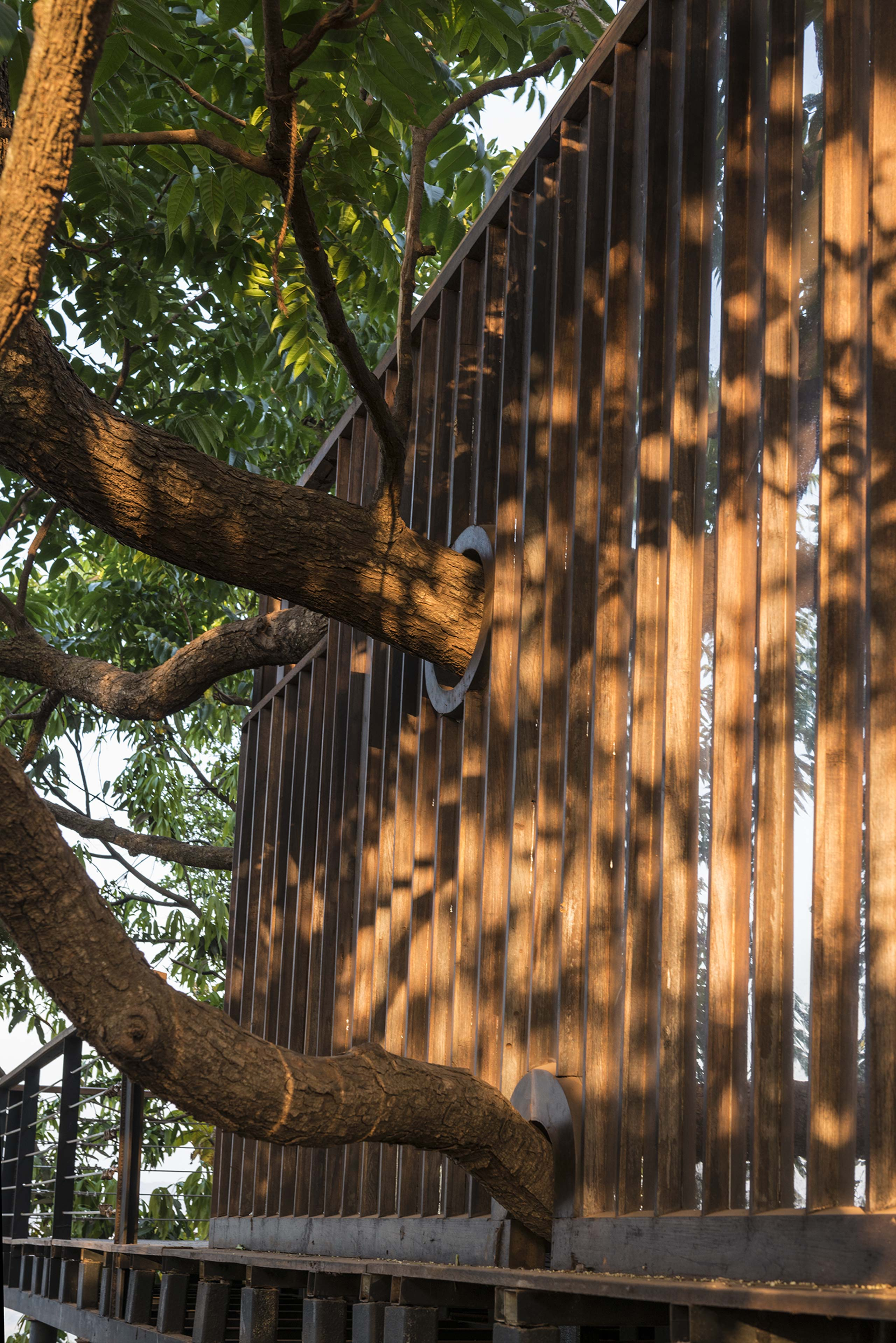 trees piercing through the reflective screen at the tala treehouse villa alibaug maharashtra