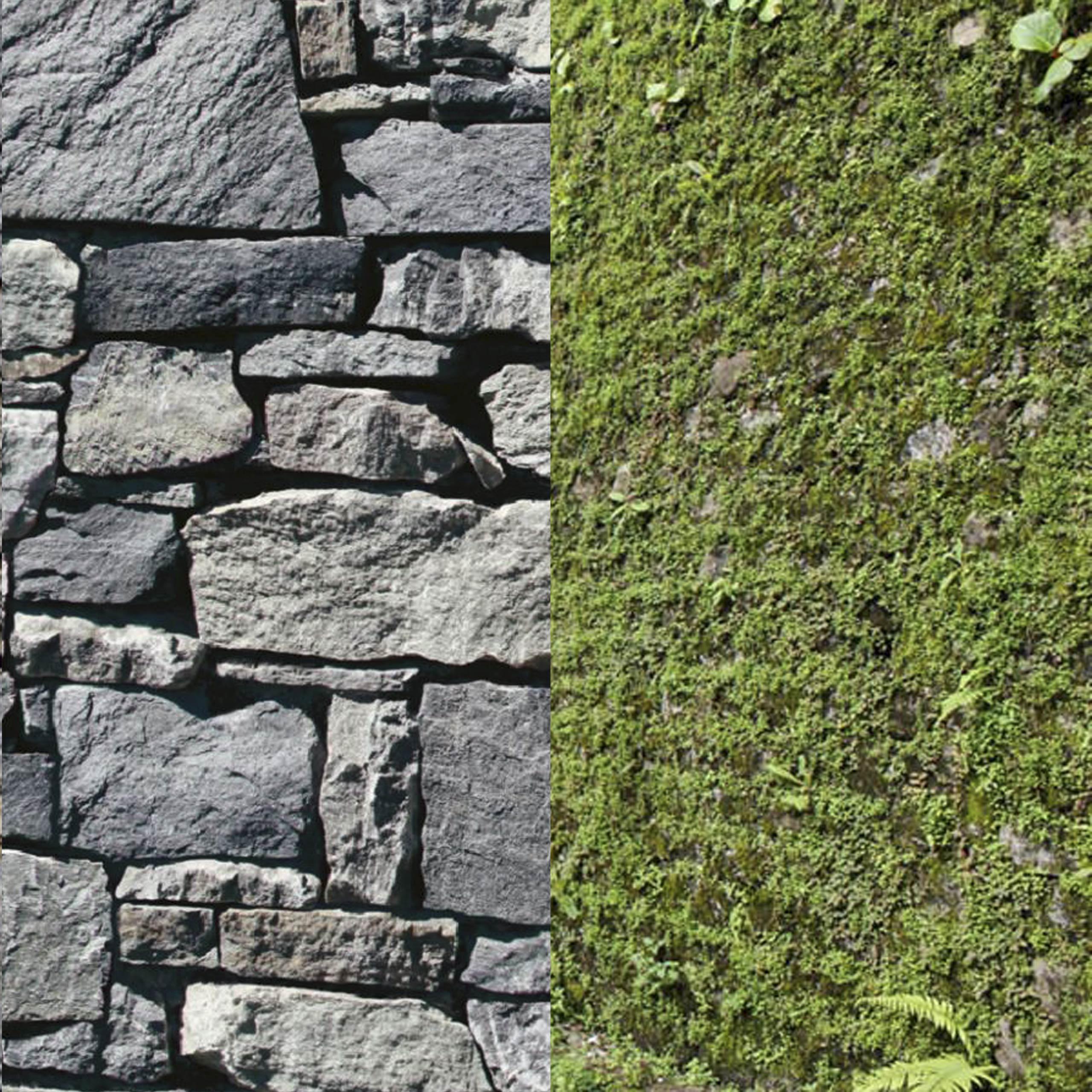 moss walls sikkim