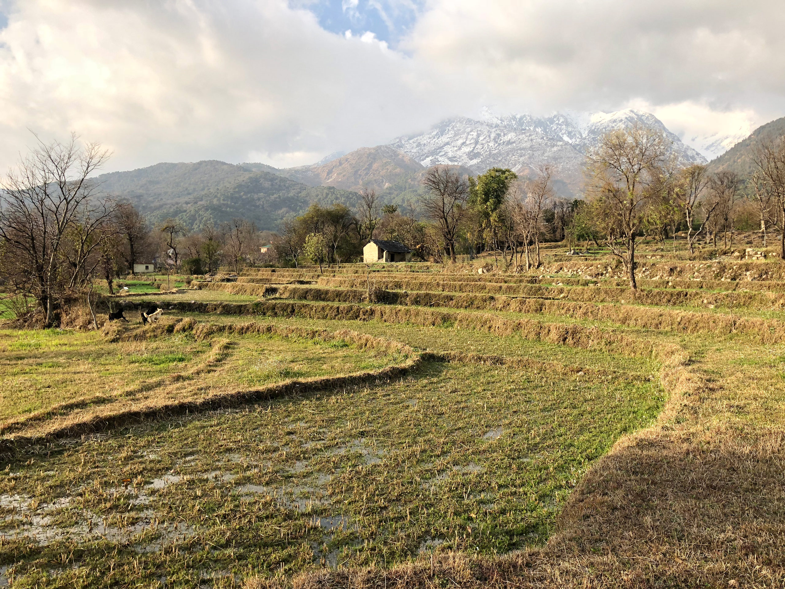 site photograph with terraced fields and Dhauladhar mountain range