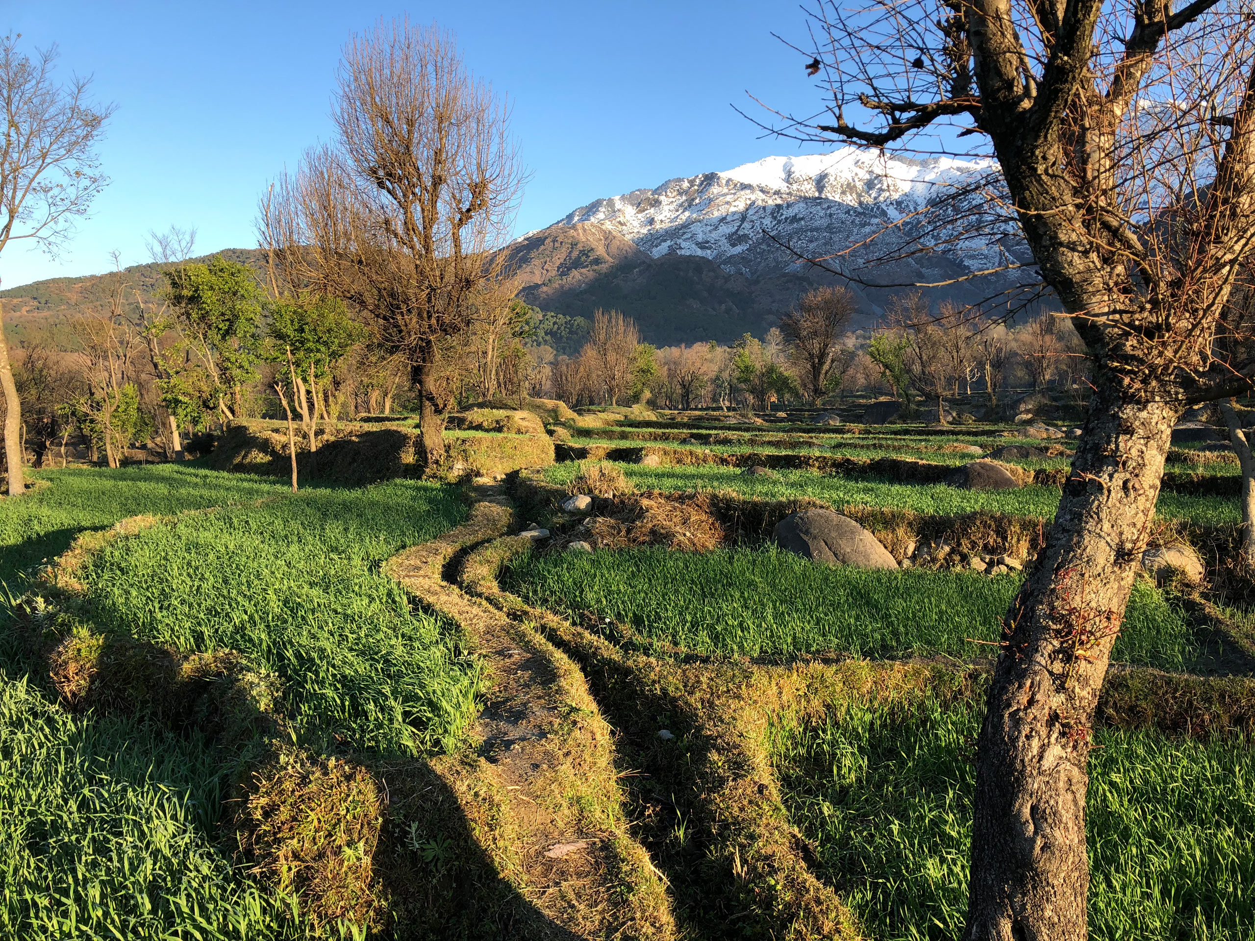 site photograph with terraced mustard fields of Yoga Retreat in Dharamshala