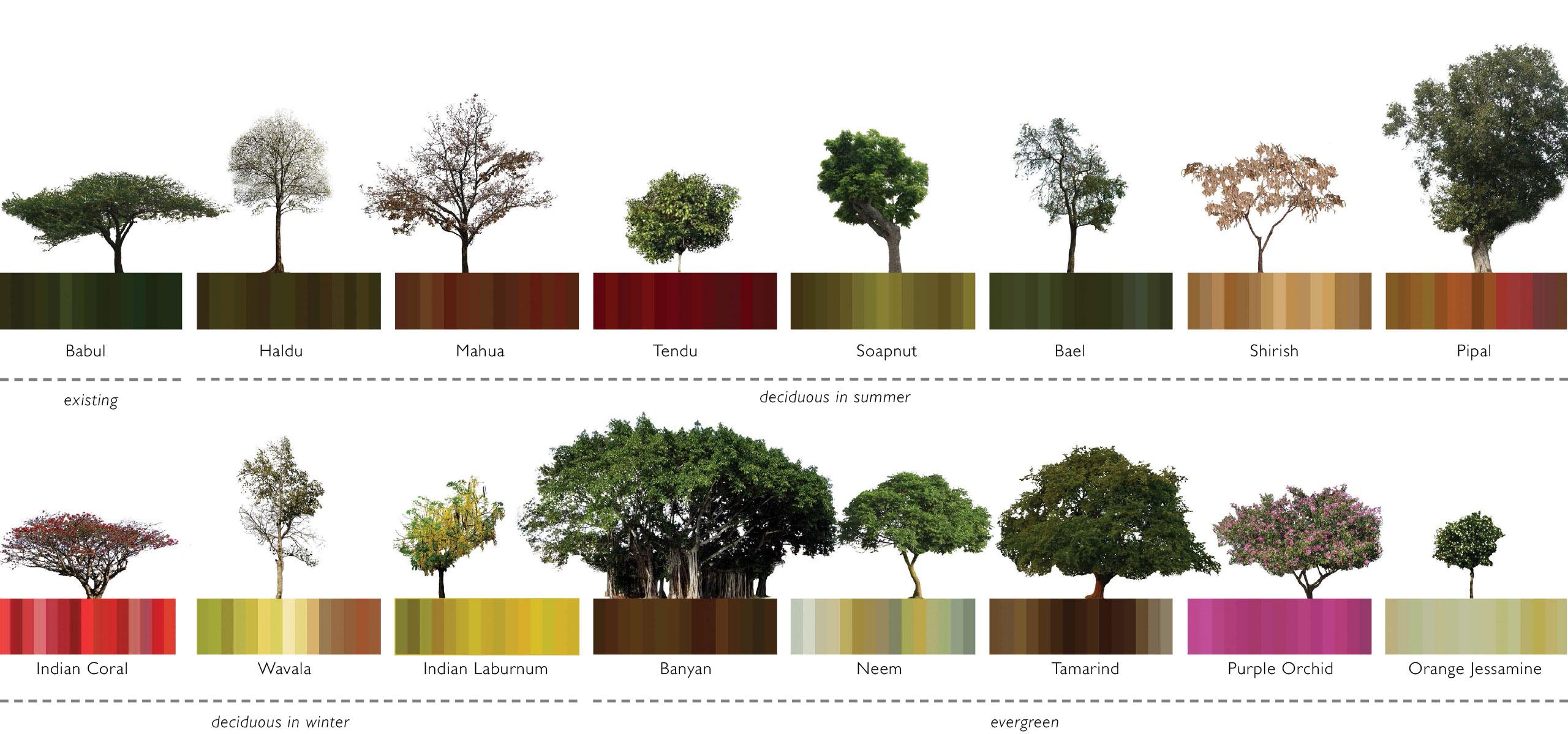 spa delhi competition design list of local trees school design