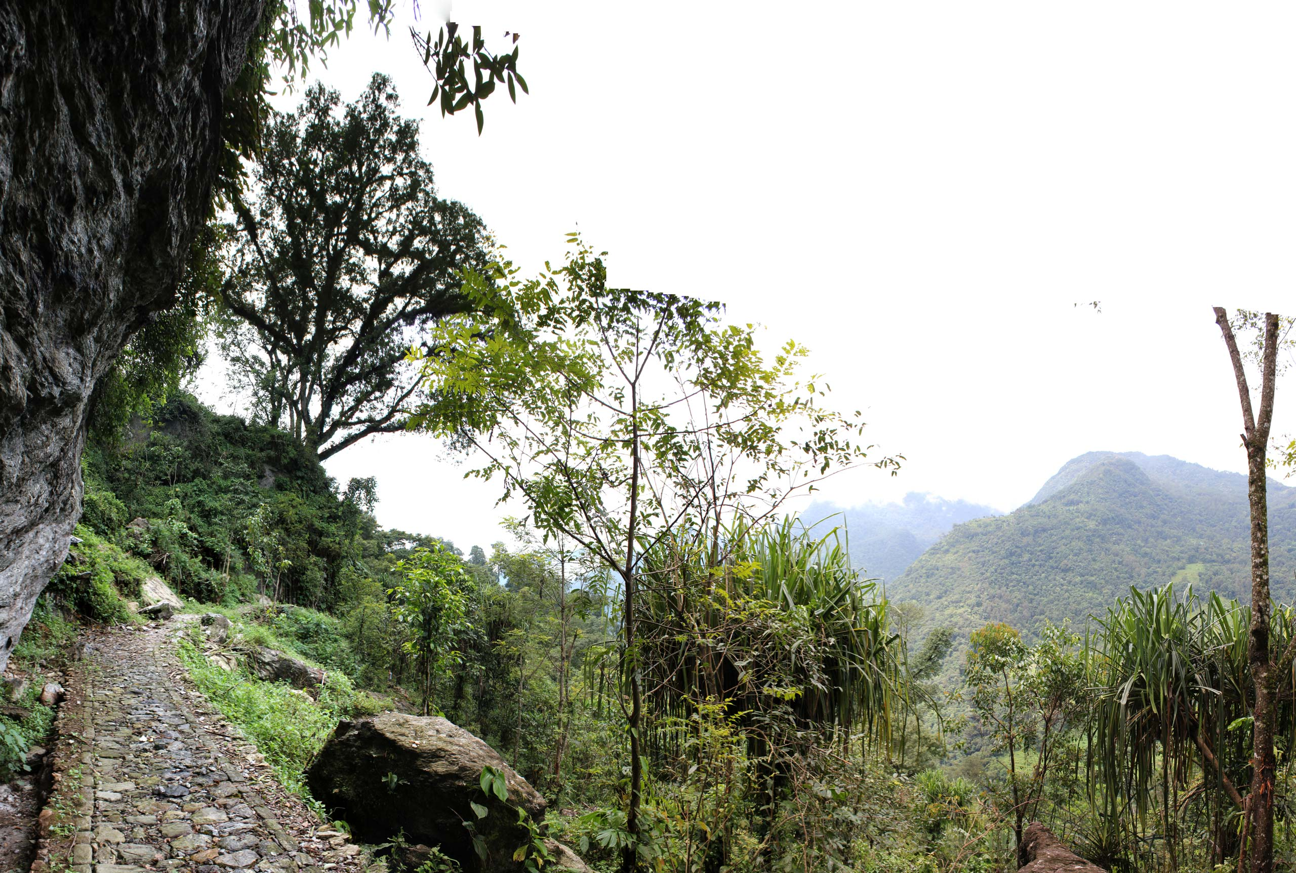 project site of Sikkim Butterfly Reserve