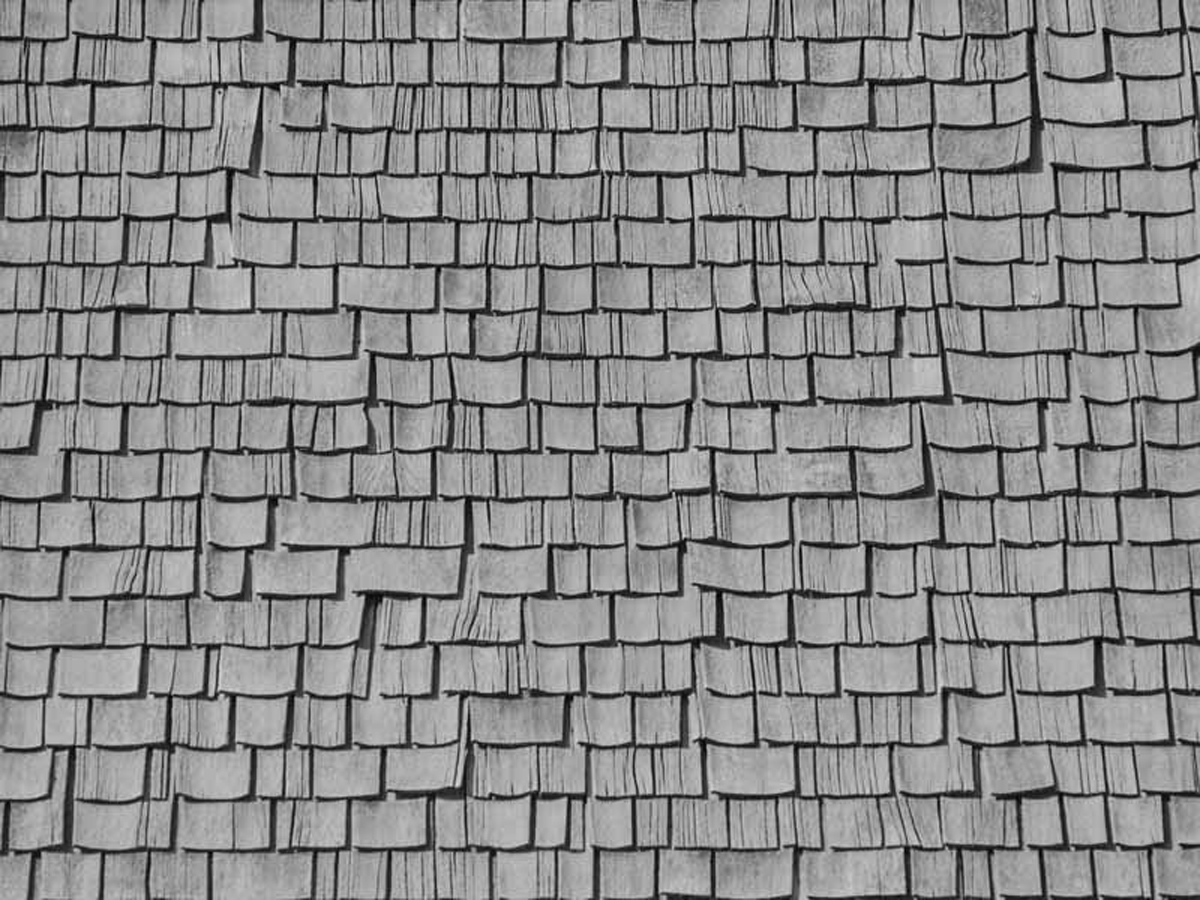 timber slates mimicking butterfly wing at Sikkim Butterfly Reserve