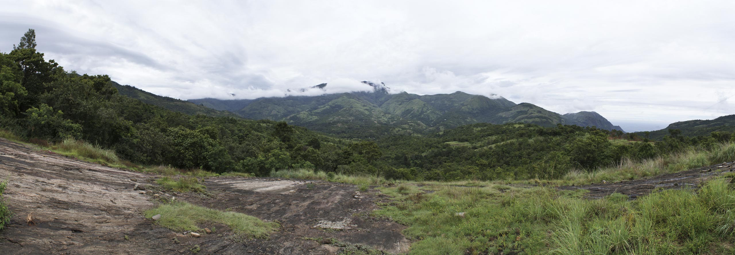 Forest Home Temenos Landscape